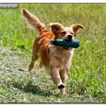 dummy-training_0809285