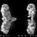 catnam-style-sw-650x244