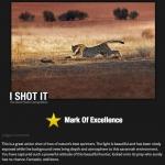 i-shot-it-3_2013-1