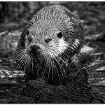 otter-pf-sw