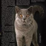 artikel-kot-0110-diego
