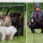 partner-hund-1109